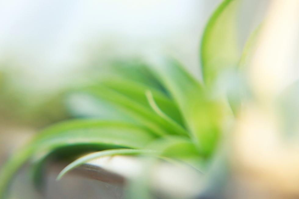 vintage_botanical_019