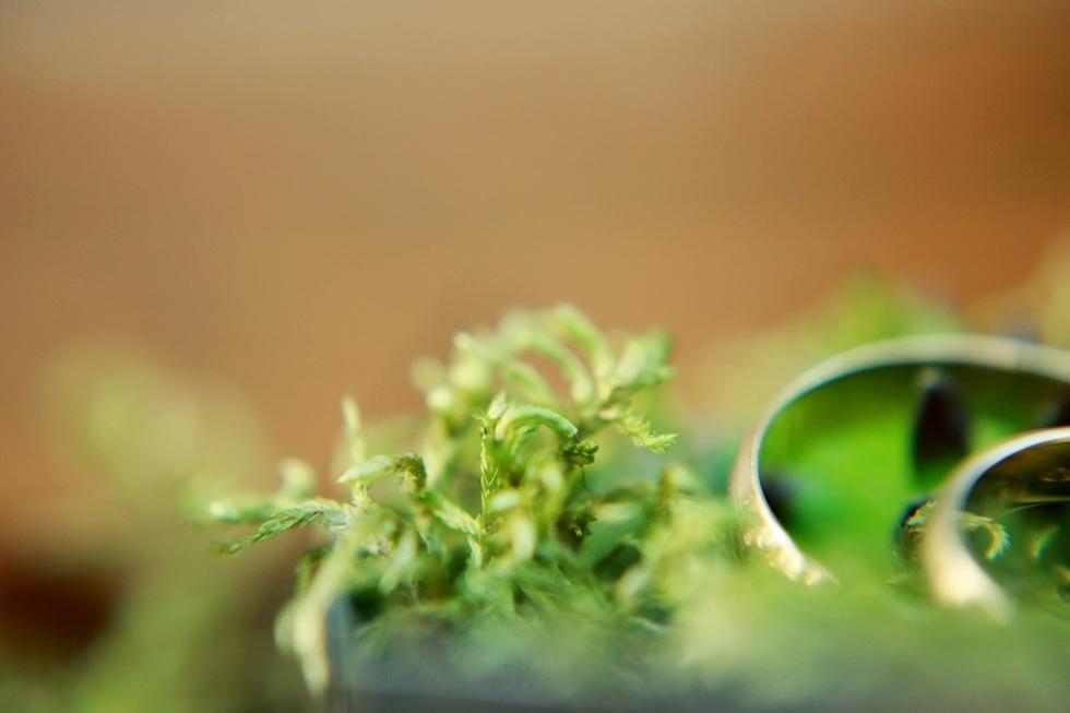 vintage_botanical_II_009